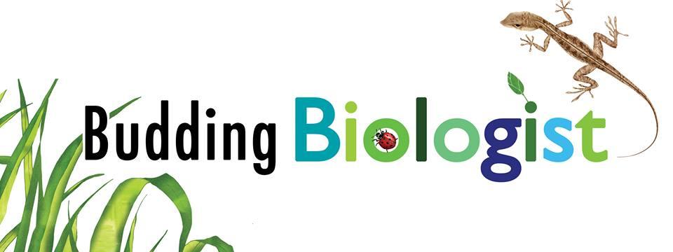Budding Bioligist