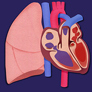 Heart-and-Lungs-Lab-square-icon-